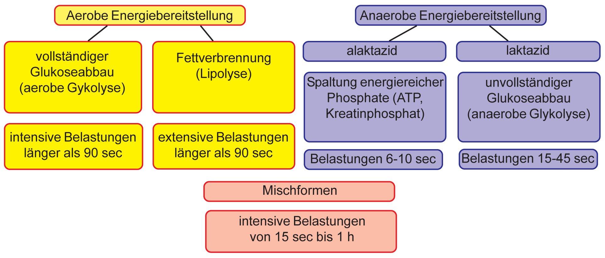 2011-12-25-Grundlagenausdauer